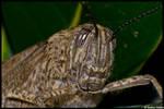 Grasshopper by AndreaStefani