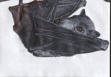 batty by dotyp