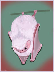 Bat study by aletia
