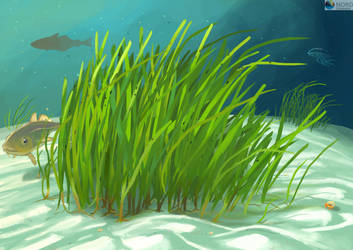 Seagrass meadow by aletia