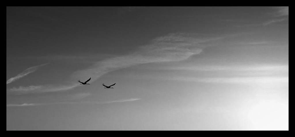 Silencio by Garconrapide