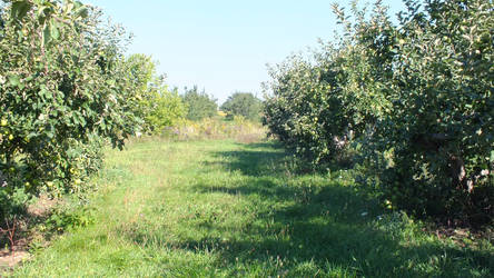 Apple Orchard 2 by Blargofdoom-Stock