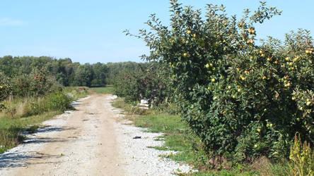 Apple Orchard 1 by Blargofdoom-Stock