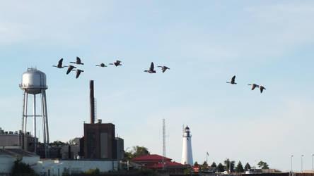 Geese by Blargofdoom-Stock