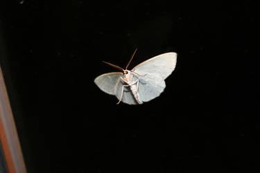 Moth by Al-Funcoot