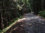 deadwood II by matzipan