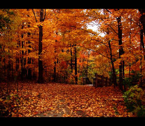 Autumn Days by sambees