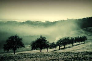 Fog Valley by DREAMCA7CHER