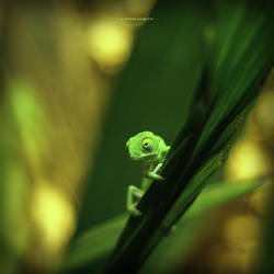 Baby Chameleon by DREAMCA7CHER