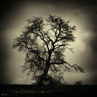 Untitled Tree by DREAMCA7CHER