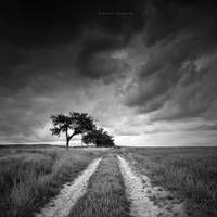My Path by DREAMCA7CHER