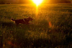 A Dogs Life by DREAMCA7CHER