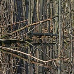 The Black Swamp  by lshack
