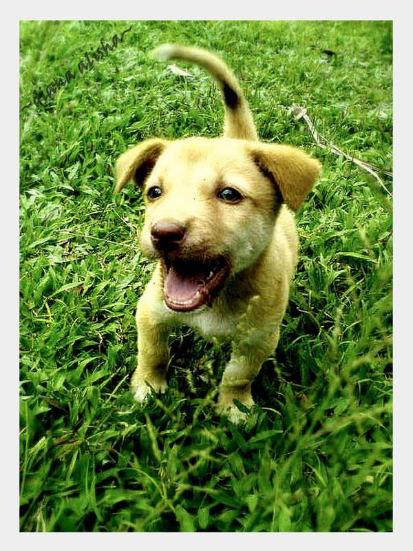 smiling puppy... by whitedaisy4alisha