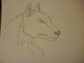 Wolf head. by Wolf-Sophie