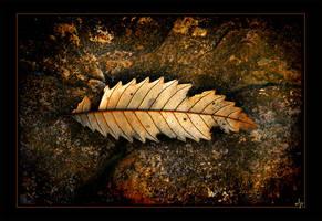 autumn leaf by dannyp5000