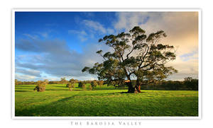 the barossa valley II by dannyp5000