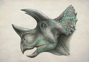 Duranteceratops by FOSSIL1991
