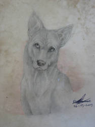 Thai Ridgeback Dog Head by X-Seion-X