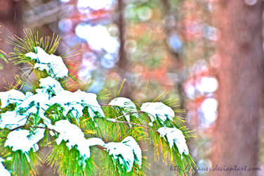 Needles and Snow by cgauss