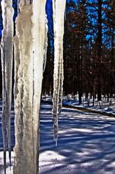 Icicles I by cgauss
