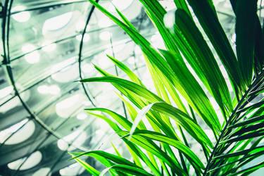 Blades by augustmobius