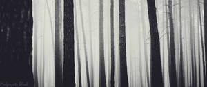 Deep Dark Forest by mpmgosia