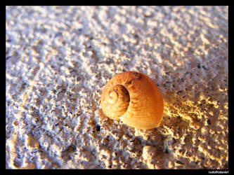 The tiny snail shell by rodolfodaniel