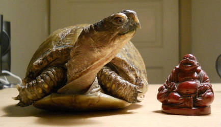 Turtle + Monk by lordturtlemonk