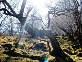 Faerie Woods by tangledfrog