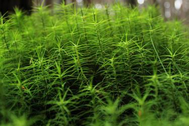Moss by tangledfrog