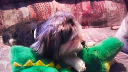 My dog ate Gummy by FroyoShark
