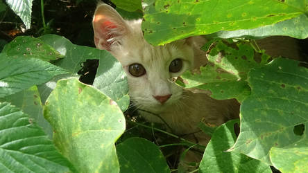 jungle cat by FordPrefectWonTheBet