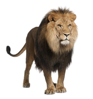 Lion Stock 1 PNG by Gilgamesh-Art