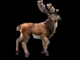 Deer PNG Stock 2 (2-3) by Gilgamesh-Art