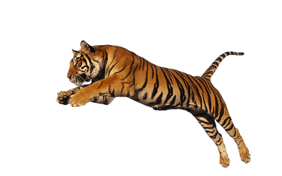 Tiger Stock 1 by Gilgamesh-Art