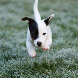 Hoverdog by toosas