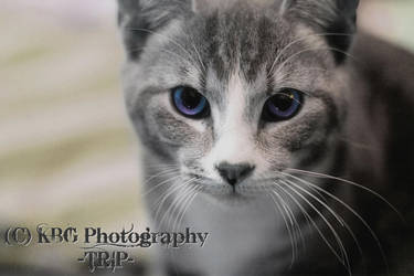 Fur Baby by KBGphotography