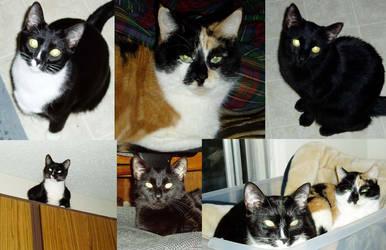 My Kitties by snugglekitty