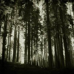 untitled (yosemite forrest) by filmnoirphotos