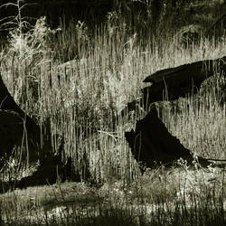 untitled (yosemite woods) by filmnoirphotos