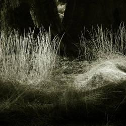 untitled (yosemite woods2) by filmnoirphotos