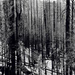 untitled (yosemite burnt woods) by filmnoirphotos