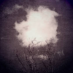 untitled (tree top and cloud) by filmnoirphotos