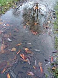 Autumn Puddle by VannyPsychoDolly