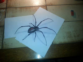 3D Spider by Kerle3