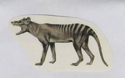 Thylacine Stock Image by jennarotancrede