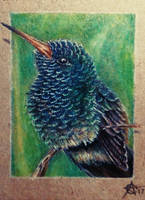 170828-21 ACEO Bee Hummingbird by Crateris