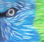 Birds eye oil pastel and graphite by Wendy0