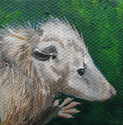 Virginia Opossum by Marbletoast